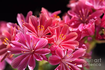 Hot Glowing Pink Delight Of Flowers Poster