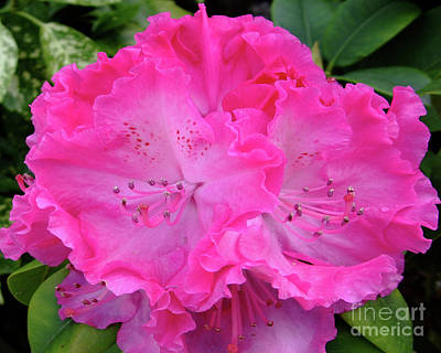 Hot Pink Rhoda Poster