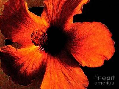 Hotfire Hibiscus Poster by Marsha Heiken