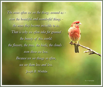 House Finch, Invisible Beauty Quote Poster by A Gurmankin