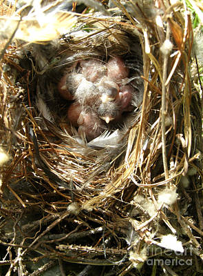 Poster featuring the photograph House Wren Family by Angie Rea