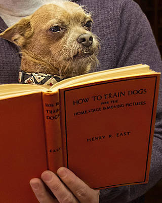 How To Train Dogs Poster by Mitch Spence