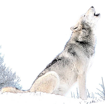 Howling Wolf 1 Poster
