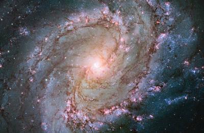 Hubble Views Stellar Genesis In The Southern Pinwheel Galaxy Poster