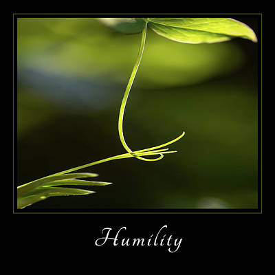 Poster featuring the photograph Humility 2 by Mary Jo Allen