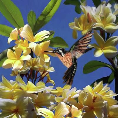 Hummingbird 01 Poster