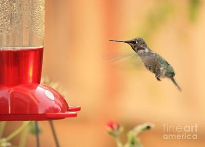 Hummingbird And Feeder Poster