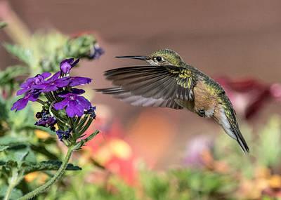 Hummingbird And Purple Flower Poster