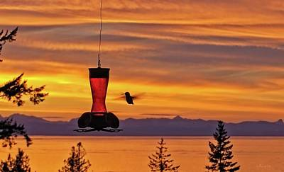 Hummingbird At Sunset. Poster