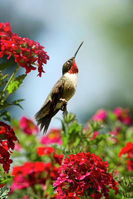 Hummingbird Garden Guardian Poster by Christina Rollo