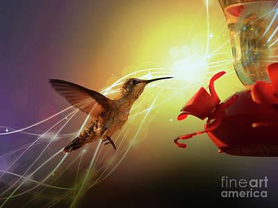 Hummingbird Golden Hour Poster