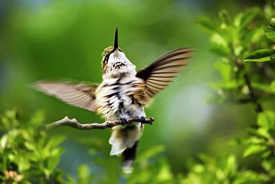 Hummingbird Happy Dance Poster
