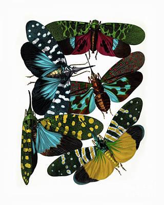 Hummingbird Hawk Moths, Vintage Etomology Illustration Poster by Tina Lavoie