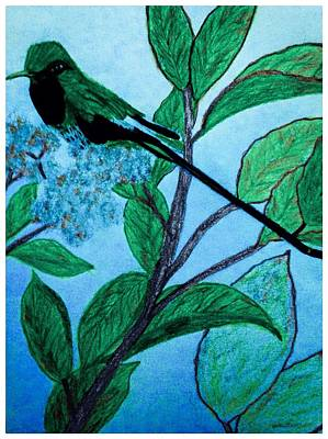 Hummingbird In Evening Poster