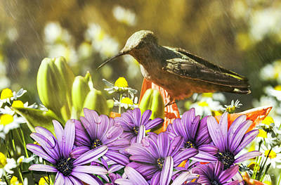 Hummingbird In The Spring Rain Poster by Diane Schuster