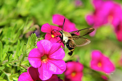 Poster featuring the photograph Hummingbird Moth by Christina Rollo
