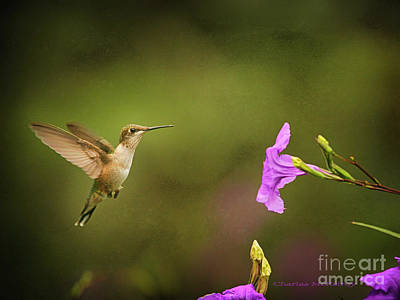 Poster featuring the photograph Hummingbird Pink Flower by Charles McKelroy