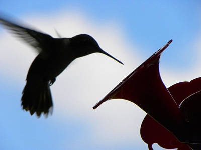 Poster featuring the photograph Hummingbird Silhouette by Sandi OReilly