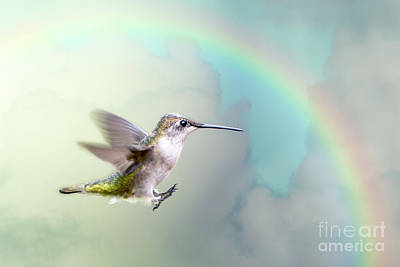 Hummingbird Under Rainbow Poster by Bonnie Barry