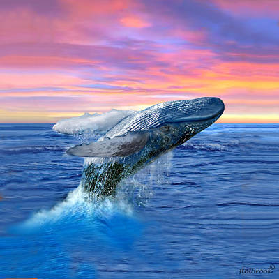 Humpback Whale Breaching At Sunset Poster by Glenn Holbrook