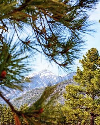 Humphreys Mountain Peak Between Pine Trees Poster
