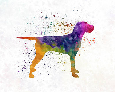Hungarian Wirehaired Vizsla In Watercolor Poster