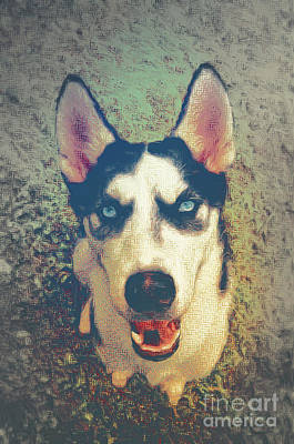 Husky Modern Poster by Angela Doelling AD DESIGN Photo and PhotoArt