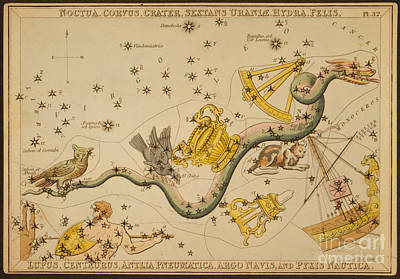 Hydra And Surrounding Constellations Poster