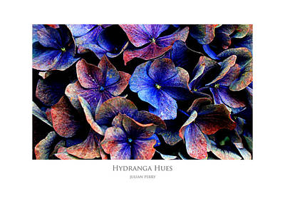 Poster featuring the digital art Hydranga Hues by Julian Perry