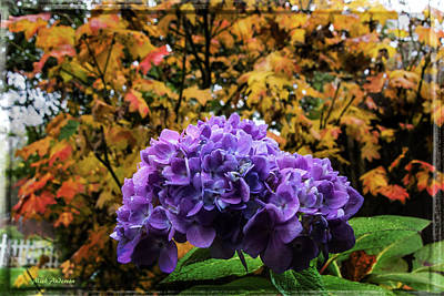 Hydrangea Autumn  Poster by Mick Anderson