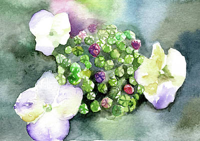 Hydrangea Buds Poster by Lydia Irving