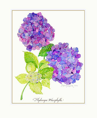 Hydrangea Poster by Kimberly McSparran