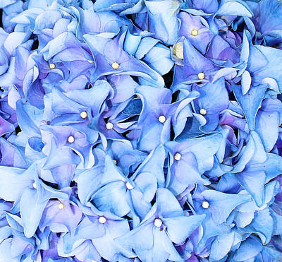 Poster featuring the photograph Hydrangea by Kristin Elmquist