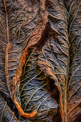 Hydrangea Leaves - Center Poster by Nikolyn McDonald