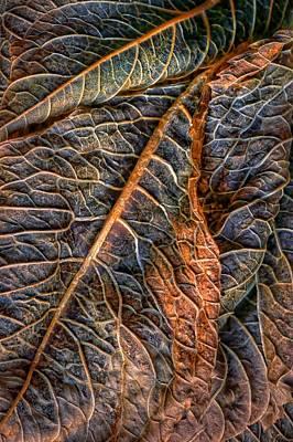 Hydrangea Leaves - Left Poster by Nikolyn McDonald