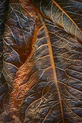Hydrangea Leaves - Right Poster by Nikolyn McDonald