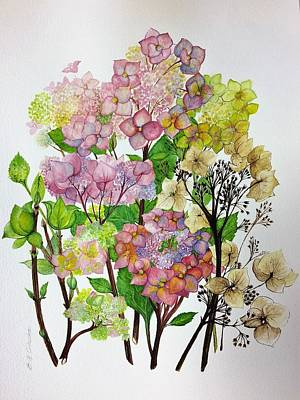 Hydrangea's Changing Colours Poster