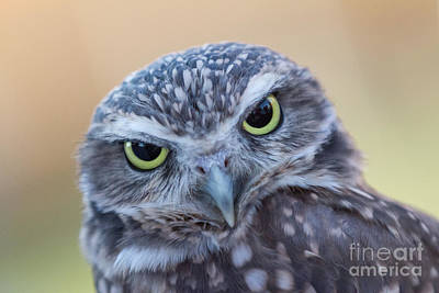 Poster featuring the photograph I Give A Hoot by Chris Scroggins