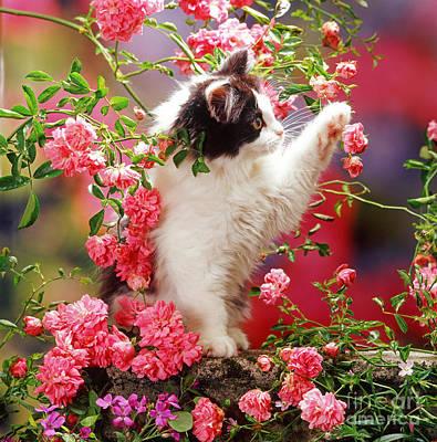 I Love Roses Poster