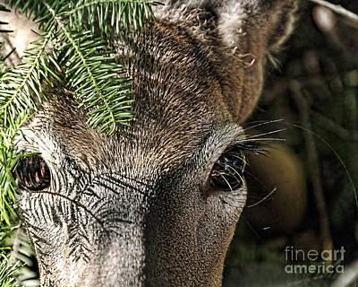 I See You Ginkelmier Inspired Deer Poster