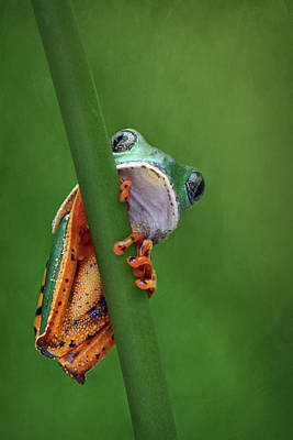 I See You - Tiger Leg Monkey Frog Poster by Nikolyn McDonald