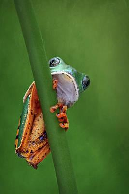 I See You - Tiger Leg Monkey Frog Poster