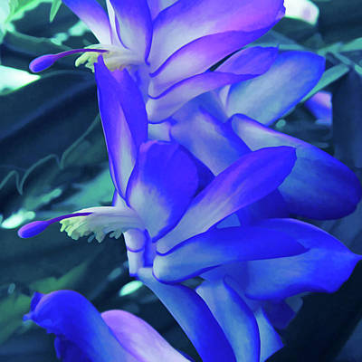 Poster featuring the photograph Ice Cold Christmas Cactus Flower by Aimee L Maher Photography and Art Visit ALMGallerydotcom