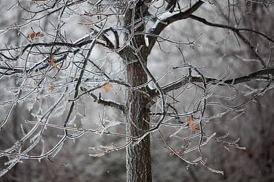 Ice Tree Poster