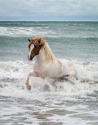 Icelandic Horse In The Sea, Longufjorur Poster by Panoramic Images
