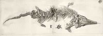 Ichthyosaur Skeleton Engraving 1819 Home Poster by Paul D Stewart