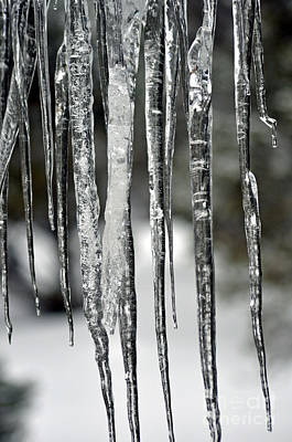 Poster featuring the photograph Icicles by Juls Adams