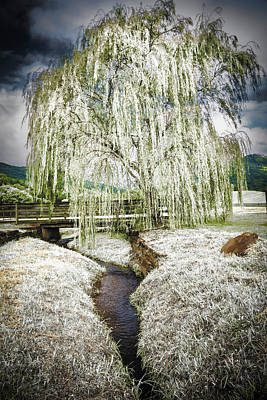 Icy Tree In The Meadow Poster by Debra and Dave Vanderlaan