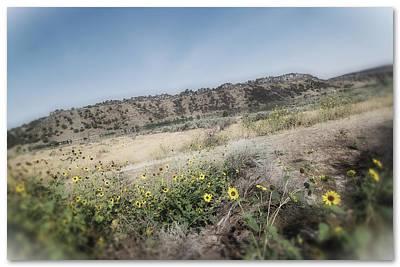 Idaho Wildflowers Poster