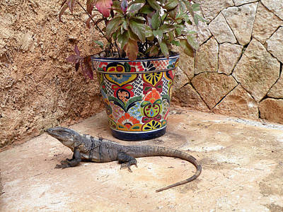 Poster featuring the photograph Iguana by Dianne Levy